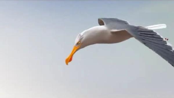 3-gull