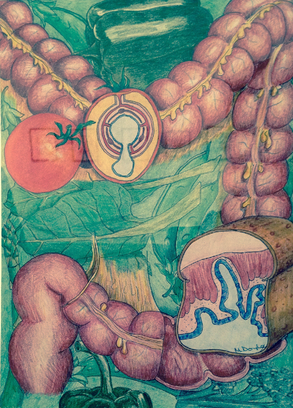 38 - Bowel Diet, 29cm x 20cm, NFS. The image is a drawing of a portion of the large bowel with high fibre food in the background. The cross-section of the loaf of bread and tomato illustrate the diverticuli (small pouches) found in the lumen (inside) of the bowel.